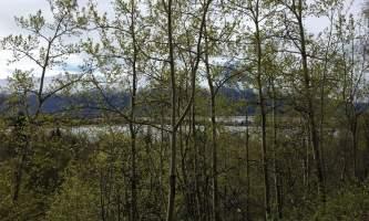 Maud-road-lakes-trail IMG_8343-ov1nxp