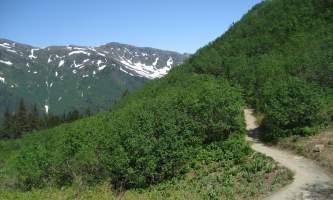 Mt_roberts-alpine-trailmt_roberts-sarah-fullilove-org2km