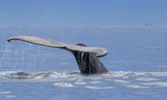 Soldotna-bnb-alaska-fishing-charters-10527414_10154414190010007_9176777400026764000_n-ohfh16