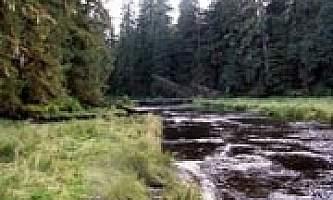 Sweet water lake cabin 02 mqidmv