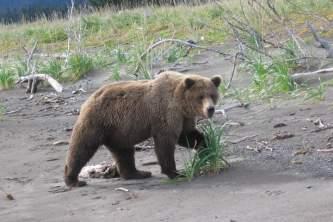 Bear viewing natron bear8 pktx4t