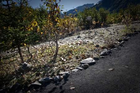 1951 Sign - Glacier View Trail