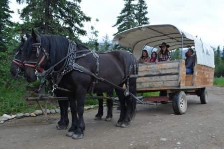 Denali Black Diamond Covered Wagon
