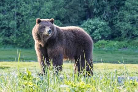 Pack Creek Bear Tours