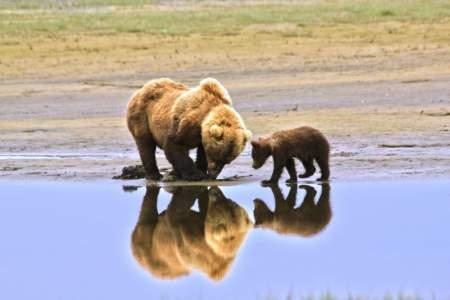 Alaska Bear Adventures Day Tours