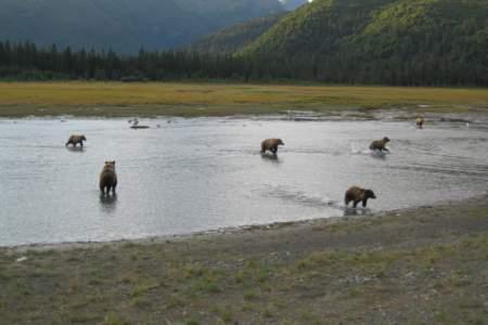 Alaska Bear Camp Overnight Adventures