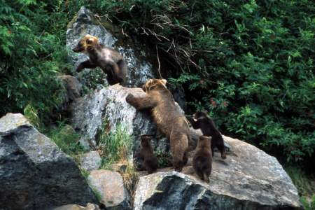 Rust's Bear Viewing