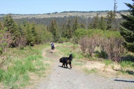 Homestead Trail at Rogers Loop Rd