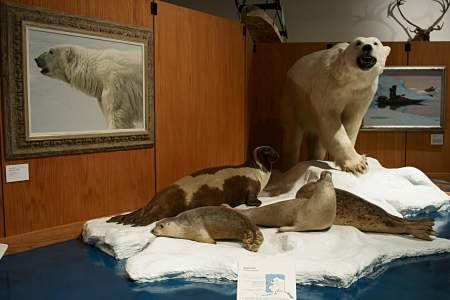 31. Polar Bears