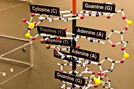 37. Systematics and DNA