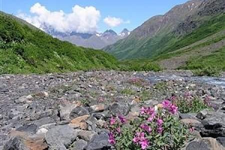 Mountain Meadow Trail
