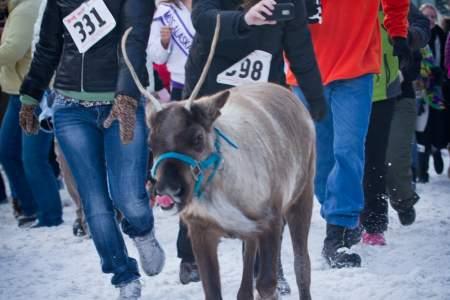Running of the Reindeer
