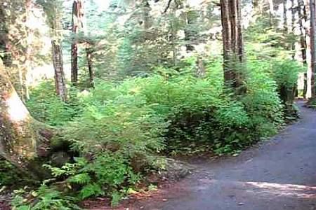 Shelikof Trail
