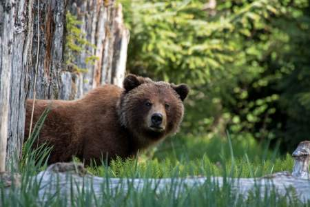 Juneau Guided Tours