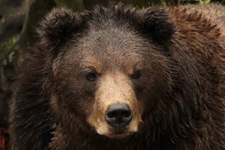 Fortress of the Bear: Guaranteed Bear Viewing