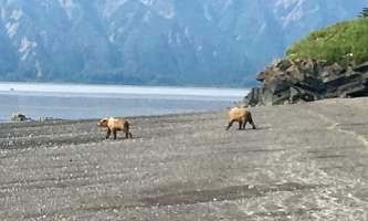 Alaska Air Service Bears Lake Clark IMG 5260