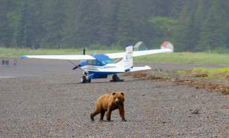 Alaska Air Service Bears Lake Clark IMG 6505