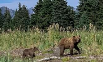 Alaska Air Service Bears Lake Clark IMG 7716