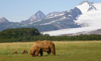 Alaska Air Service Bears Lake Clark Slide Mtn