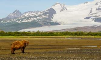 Alaska Air Service Bears Lake Clark slide mountain bears
