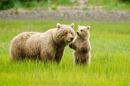 Alaska Air Service: Bear Viewing