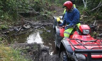 Girdwood ATV Bear Print in Mud alaska atv adventures