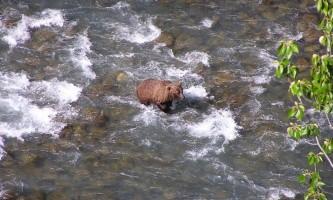 Girdwood 3 Bird Creek Bear alaska atv adventures