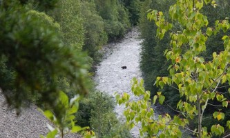 Girdwood Bear crossing creek alaska atv adventures