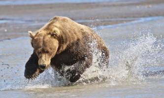Alaska bear adventures IMG 3492