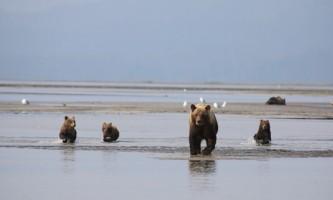 Alaska bear adventures IMG 0003