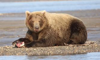 Alaska bear adventures IMG 9634