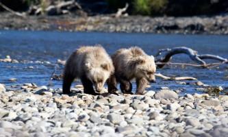 Alaska Bear Adventures with K Bay pm 209mod2019