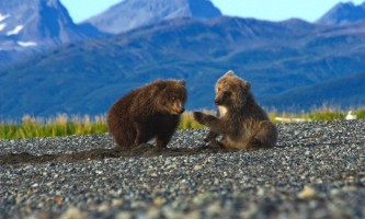 Alaska Bear Adventures with K Bay IMG 22542019