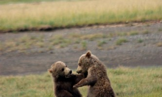 Alaska Bear Adventures with K Bay 142019