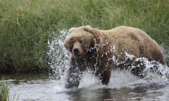 Alaska Bear Adventures with K Bay 07 02 09 37292019