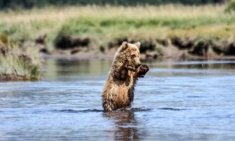 Alaska Bear Adventures with K Bay 482019