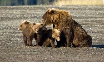 Alaska Bear Adventures with K Bay pm 167mod2019