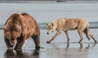 Alaska Bear Adventures with K Bay 122 22019