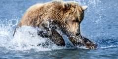 Alaska Bear Adventures Boat-Based Bear Viewing Tours
