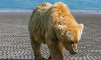 Alaska Bear Adventures with K Bay 07 07 09 6473 Cleaned Adjusted 22019