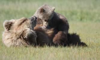 Alaska Bear Adventures with K Bay 07 29 09 2812 22019