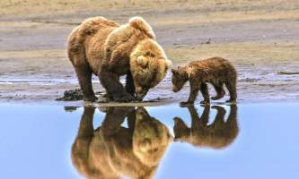 Alaska Bear Adventures with K Bay 2010 Jan 02 6061 M 22019
