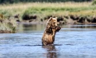 Alaska Bear Adventures with K Bay 482019