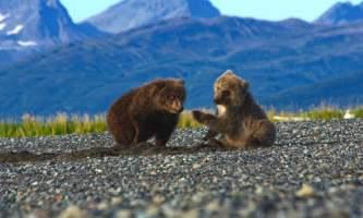Alaska Bear Adventures with K Bay IMG 22542019