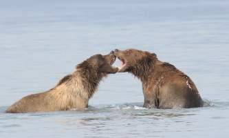 Alaska bear adventures IMG 9898