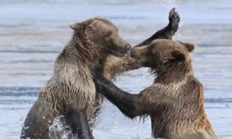 Alaska bear adventures RJ7 G Wtm 221sizeoriginal