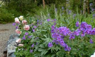 2021 Alaska Botanical Garden 2005 090