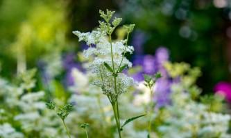 2021 Alaska Botanical Garden ABG Flowers 1721