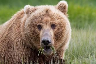 Alaska by air bear viewing Screen Shot 2020 03 27 at 9 38 03 AM