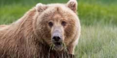 Alaska By Air: Bear Viewing